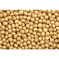 Organic Soybean Manufacturers
