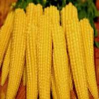 Baby Corn Manufacturers