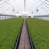 Agricultural Greenhouses Manufacturers