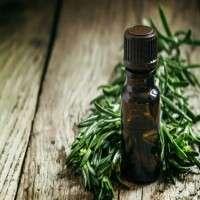 Tea Tree Oils Manufacturers