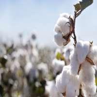 有机棉花 制造商