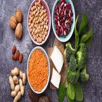 Vegetarian Protein Manufacturers