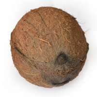 One Eye Coconut Manufacturers