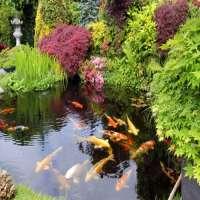 Garden Pond Manufacturers