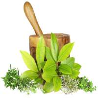 Ayurvedic Supplements Manufacturers