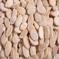 Muskmelon Seed Manufacturers