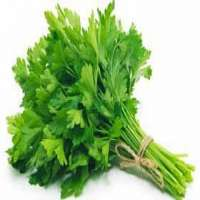 Coriander Leaf Powder Manufacturers