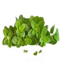 Oregano Leaves Manufacturers