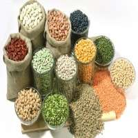 Hybrid Seeds Manufacturers