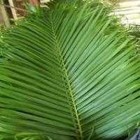 Areca Leaf Manufacturers