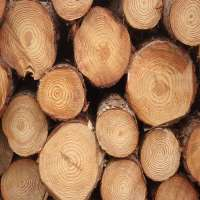 Pine Wood Logs Manufacturers