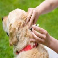 Flea Treatments Manufacturers