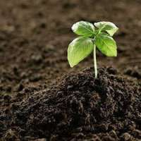 Organic Soil Conditioners Manufacturers
