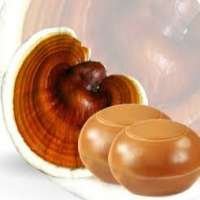 Ganoderma Soap Manufacturers