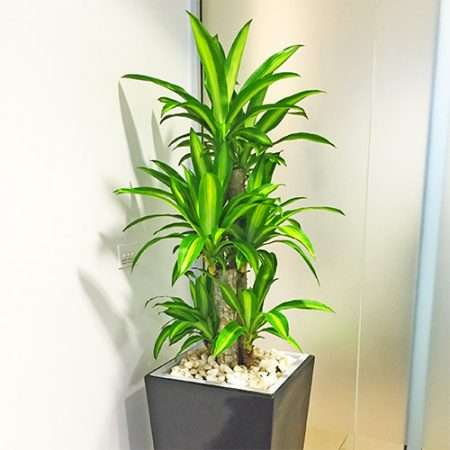 Happy Plant Care Manufacturers