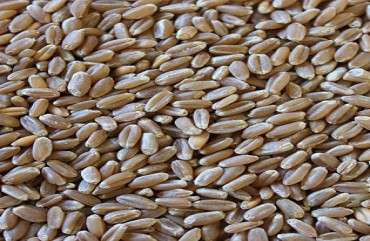 Hard Red Winter Wheat Grade Manufacturers
