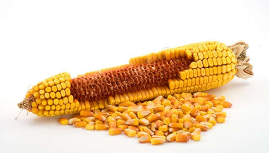 Harvesting Corn Seed Manufacturers
