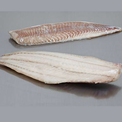 Saithe Fish Fillet Manufacturers