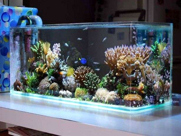 Salt Water Tank Manufacturers