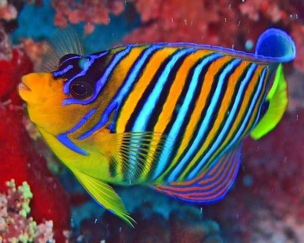 Saltwater Tropical Fish Manufacturers