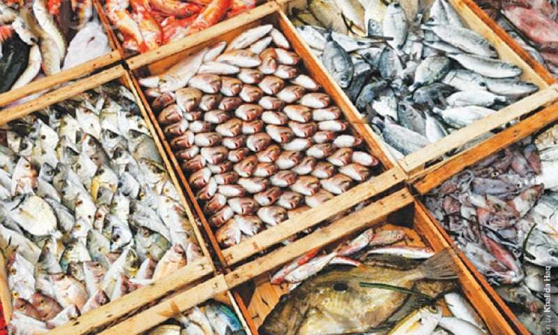 Seafood Fish Production Manufacturers