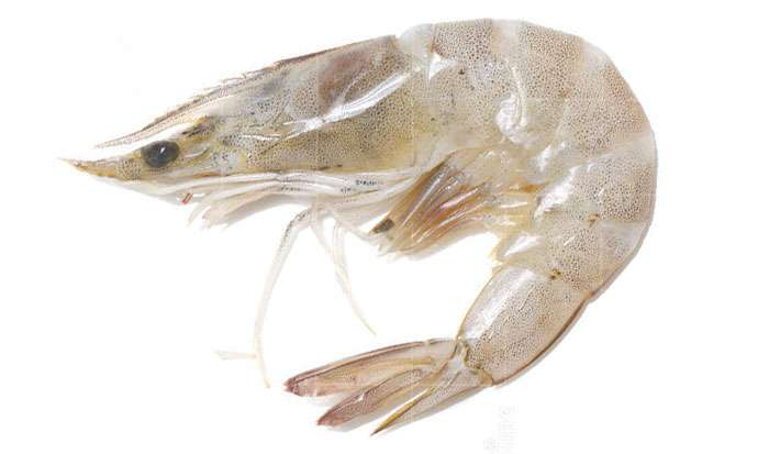 Seafood White Shrimp Manufacturers