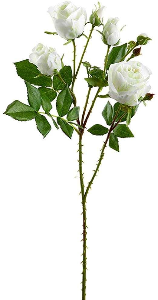 丝玫瑰花蕾 制造商