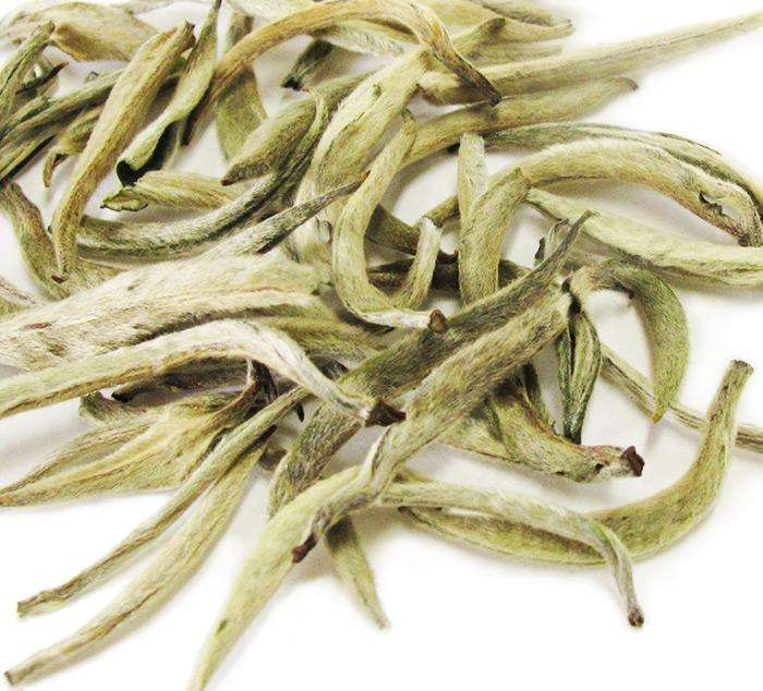 Silver Needle White Tea Manufacturers