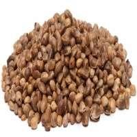 Hemp Seeds Manufacturers