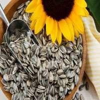 Sunflower Seeds Manufacturers