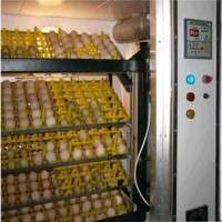 Egg Incubators Manufacturers