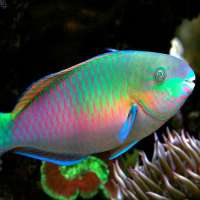 Parrot Fish Manufacturers
