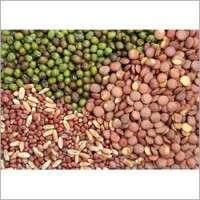 Hybrid Vegetable Seeds Manufacturers