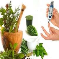 Diabetes Herbs Manufacturers