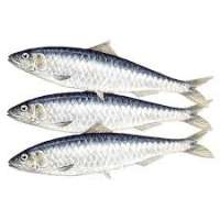Sardine Fish Manufacturers