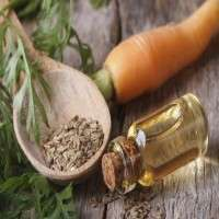 Carrot Seed Oil Manufacturers