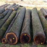 Walnut Wood Logs Manufacturers