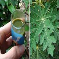 Papaya Leaves Extract Drops Manufacturers