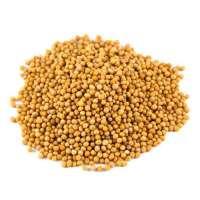 Organic Mustard Seed Manufacturers
