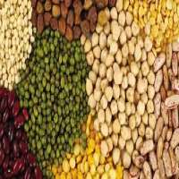 Organic Pulses Importers