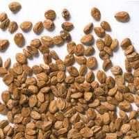 Shrub Seeds Manufacturers