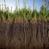 Soil Probiotics Manufacturers
