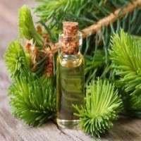 Cedar Leaf Oil Manufacturers