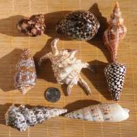 Shell Decorations Manufacturers