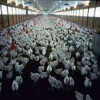 Animal Husbandry Manufacturers