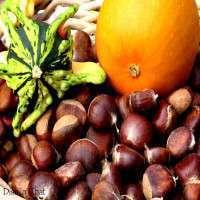 Fresh Chestnut Manufacturers