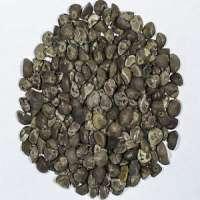 Argyreia Nervosa Seeds Manufacturers