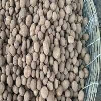 Mushroom Seeds Manufacturers