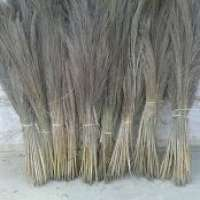 扫帚草 制造商