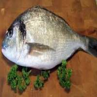 Sea Bream Manufacturers